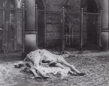 1945 killed about 4000 animals of the Berlin Zoo.jpg