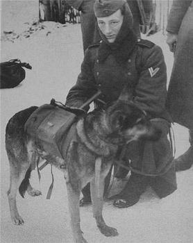 Anti-tank dogs.jpg