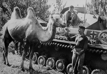 Bactrian camel and Panzer.jpg