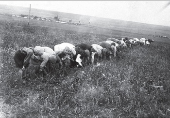 Пионеры собирают в поле колоски, г. Сталино, 1934 год..jpg