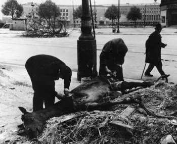Desperate Berliners cut meat from a dead horse in the days after the war's end.jpg