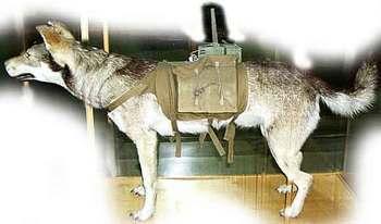 地雷犬.jpg