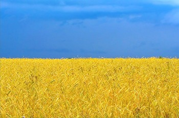 Flag of Ukraine.jpg