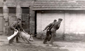 Nazi stealing a pig from Ukrainians - 1942.jpg