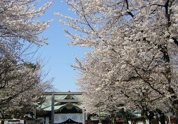 Sakura cherry blossoms in Yasukuni Shrine.jpg