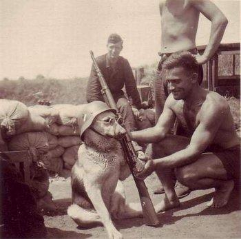 german dog soldier.jpg