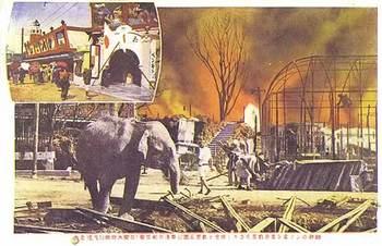 全焼したる花屋敷、呑気な象くんの避難.jpg