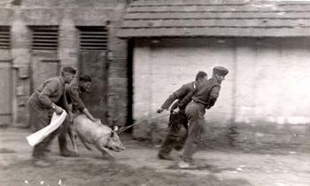 Nazi stealing a pig from Ukrainians - 1942.jpg
