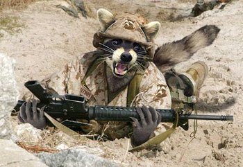 Raccoon-Soldier.jpg