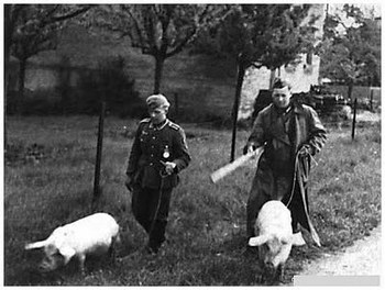 german-soldiers-slaughtered-pigs.jpg