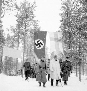 german finn.jpg
